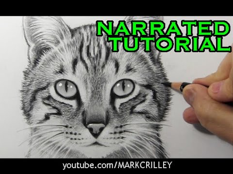 How to Draw a Cat [Narrated Step-by-Step Tutorial]