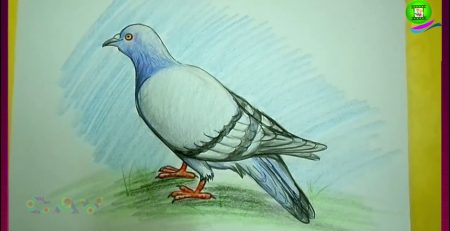 How to Draw Pigeon Easy Step by Step - Children Drawing Art Tutorials - Dove For Kids